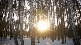 The sun`s rays in the winter garden. Through the trees.full hd video stock video