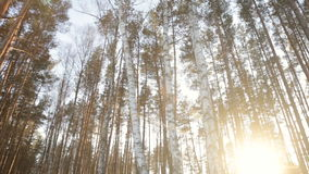 The sun`s rays in the winter garden. Through the trees.full hd video stock footage