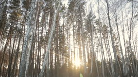 The sun`s rays in the winter garden. Through the trees.full hd video stock video footage