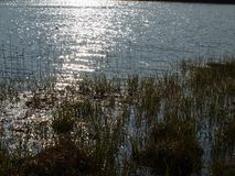 Sun's reflection on the surface of a pond. South Bohemia stock photography