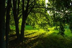 Sun& x27; s stralen door het gebladerte Royalty-vrije Stock Foto's
