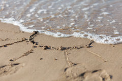 Sun   on  sand near  sea Royalty Free Stock Images