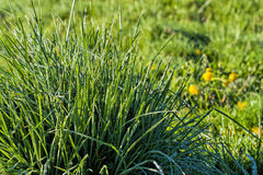 Sun schmilzt den Frost auf dem Gras Lizenzfreies Stockfoto