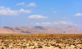 Sun-scorched landscape of the Socotra island, Yemen Stock Image