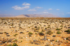 Sun-scorched landscape of the Socotra island, Yemen Stock Photo