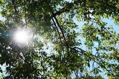 Sun se encendió de fondo de la rama de árbol Fotos de archivo