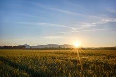 Sun se lève au-dessus les des champs de blé dans la forêt image libre de droits