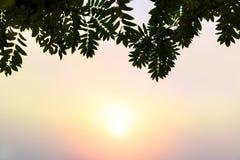 Sun se levant un matin brumeux derrière les feuilles Images stock