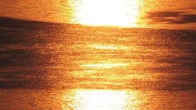 Sun se reflète dans l'eau de rivière de lac, coucher du soleil, lever de soleil banque de vidéos