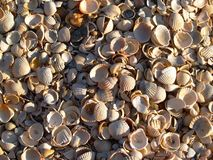 Sun seashells. Macro seashells on the beach Royalty Free Stock Image