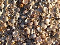 Sun seashells Royalty Free Stock Image