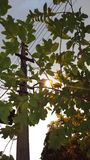 Sun seeking from leaves. On beautiful day Royalty Free Stock Photography