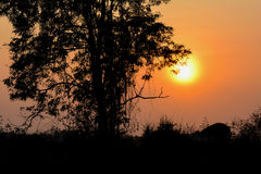 Sun Set Behind The Tree Royalty Free Stock Photo
