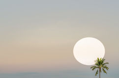 Sun set coconut tree silhouet in oblique angle Stock Photos