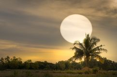 Sun set with coconut tree silhouet oblique angle. Sun set with coconut tree silhouet in oblique angle Stock Image