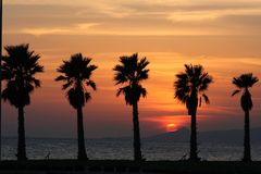 Sun set and palms stock photography