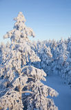Sun set in snow-covered forest Royalty Free Stock Image