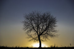 Sun set tree Stock Photography