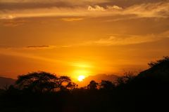 Sunset in the savannah. The sun set among the trees in the savannah stock images