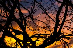The sun sets behind a beautiful tree branch royalty free stock image