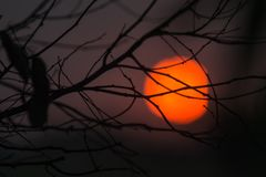 Free Sun Sets Behind The Branches Of A Tree Royalty Free Stock Image - 116406646