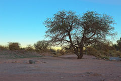 The sun sets behind a tree near San Pedro de Atacama, Atacama desert, Chile Royalty Free Stock Photos
