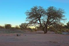 The sun sets behind a tree near San Pedro de Atacama, Atacama desert, Chile Royalty Free Stock Photos