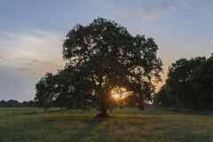 The sun sets in the branches of a tree Royalty Free Stock Photography