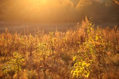 Sun sets and illuminates the autumn field with real bright color stock images
