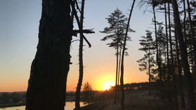 Sun sets over the horizon on the background of trees. Amazing Sun sets over the horizon on the background of trees stock video footage
