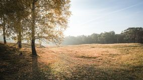 Autumn sunset over a Meadow. royalty free stock images