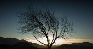 The sun sets over the mountains and passes through the branches of a tree stock video footage