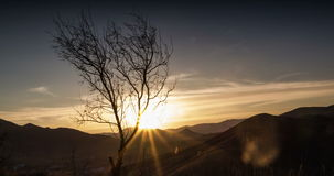 The sun sets over the mountains and passes through the branches of a tree stock footage