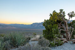 Red Rock Valley Nevada Sunset III Royalty Free Stock Photography