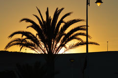 Sunset Sun Sets Behind Palm Tree Stock Photos