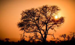 Sun setting in Africa. African sunset behind tree silhouette Stock Image