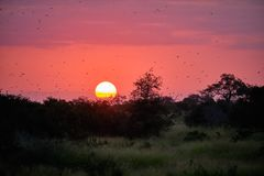 Sunset on savanna stock image