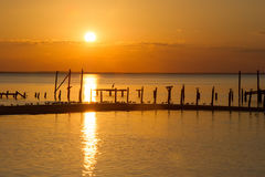 Sun setting on the bay with pier and birds Royalty Free Stock Image