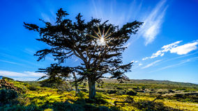 Sun setting behind a large tree in Cape of Good Hope Nature Reserve Stock Photo