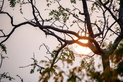 Close up tree branches with setting sun behind Stock Photography