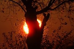 Sun setting behind tree in Northern Manitoba Stock Photos
