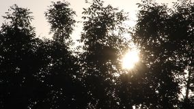 Sun setting down in the evening behind the trees in a park stock footage