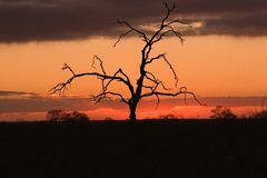 Sun setting on kruger park Royalty Free Stock Images