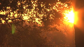 Sun setting through leaves. Video of sun setting through leaves stock video