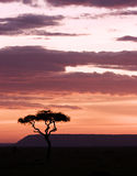 Sun setting in masai mara Royalty Free Stock Images