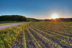 Sun setting over farm field Royalty Free Stock Images