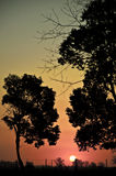 Sun setting over field Stock Photo