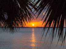 Sun setting over Indian River, Melbourne Beach, Florida. Reflecting sun setting over Indian River, Melbourne Beach, Florida, USA through palm fronds Royalty Free Stock Photography