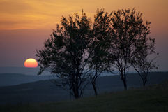 Sun setting over landscape with trees Stock Images