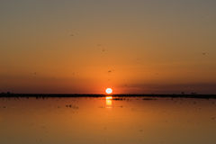 Sun setting over river with many dragonflies Royalty Free Stock Photos